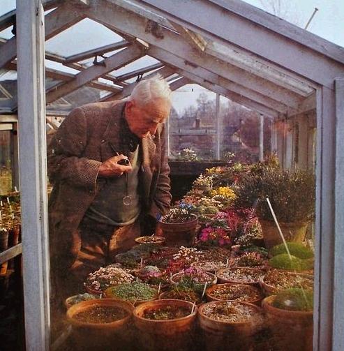 Tolkien az üvegházában.png