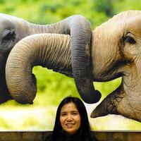 Thaiföld: Chiang Mai, Chiang Saen, Mae Sai