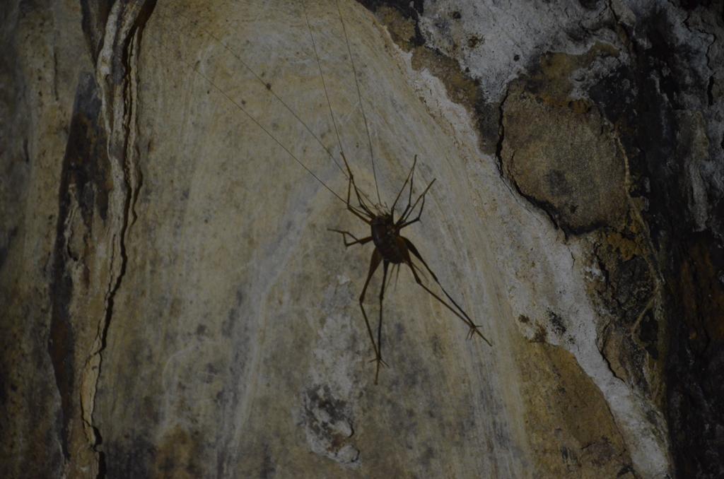 hosszu labu csunyasag.<br />a sotet barlangban nem kellemes amikor nekiugrik az ember meztelen labszaranak.