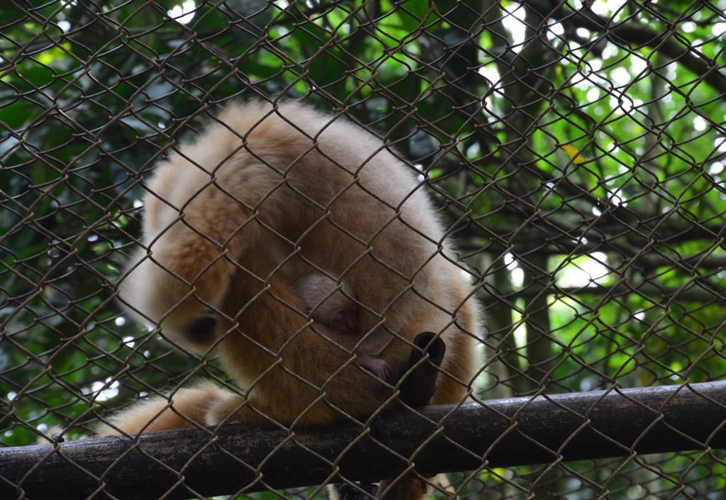 ez a majom a picinyet rejtegeti, a kis fejet latni lehet:)