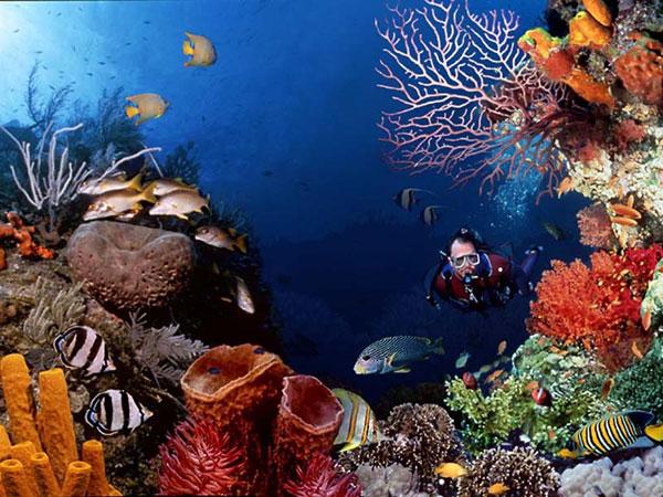 akvarium buvarral.jpg