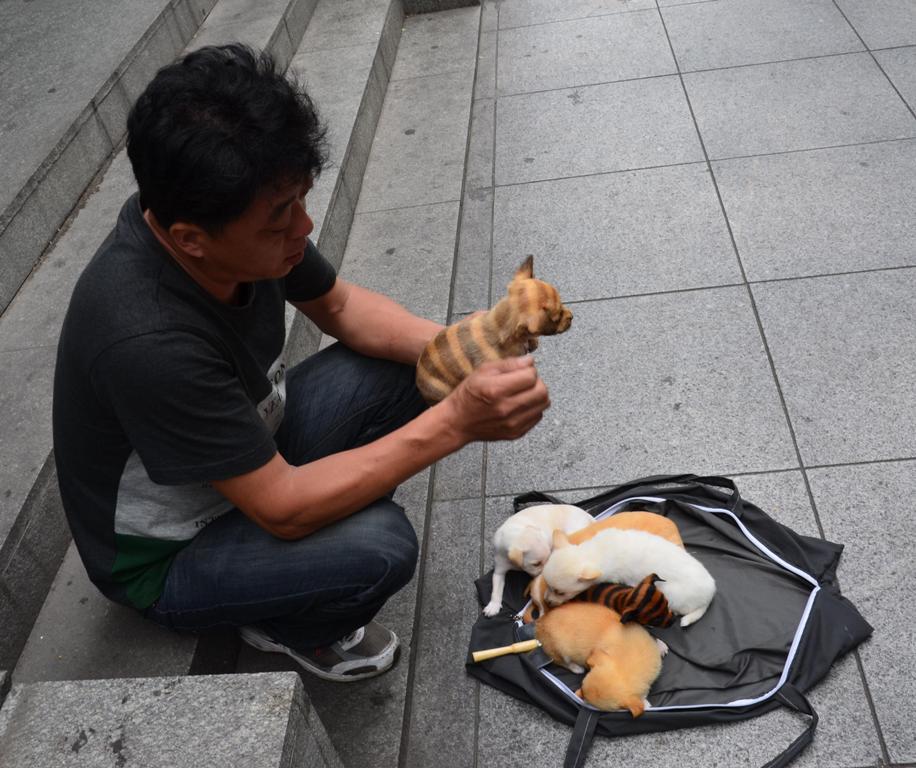 Kutyat arulo ember a Jing'an templomnal.<br />Sokaig gondolkodtam, hogy megvegyem-e a legszebb kiskutyat, amit eletemben lattam, aztan mgesem tettem.<br />Mai napig banom :(