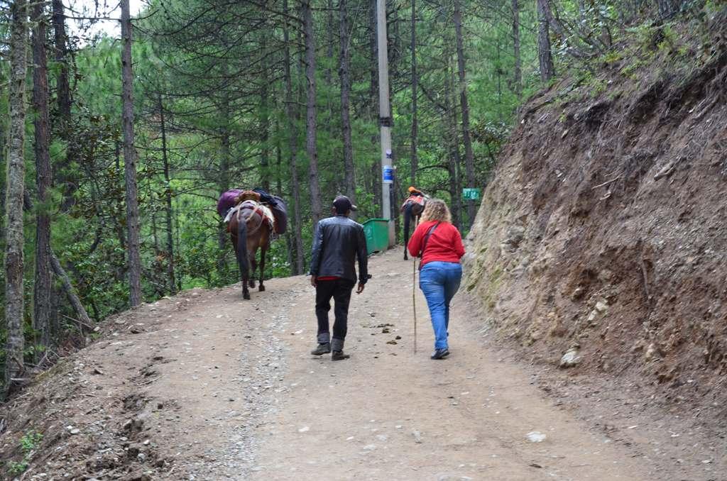 neha leszalltunk az oszverekrol es gyalogoltunk egy keveset, hogy pihenjenek.<br />szegenyeket minden nap hajtjak.<br />