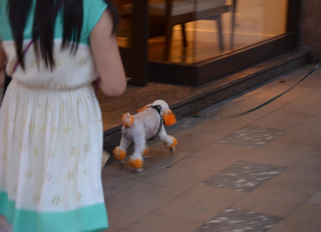 modern kutya :(