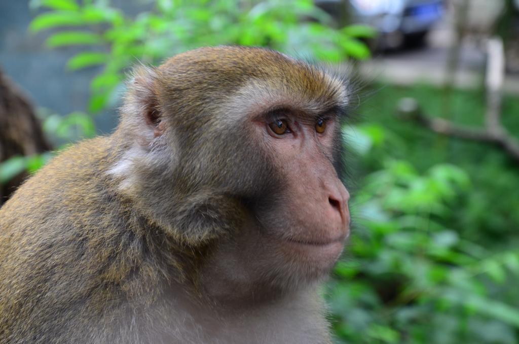 A lepcsokon felfele- vagy lefele haladva vegig ott jottek mellettunk a makakok.<br />Itt a torzsfonok pozol nekem :)