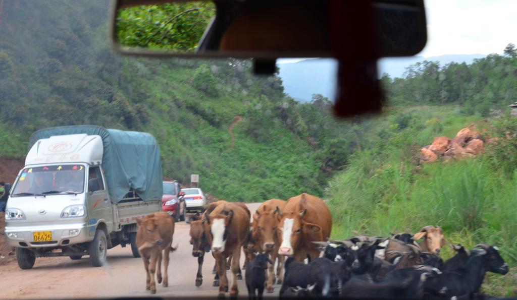 tehenek, kecskek, jakok...