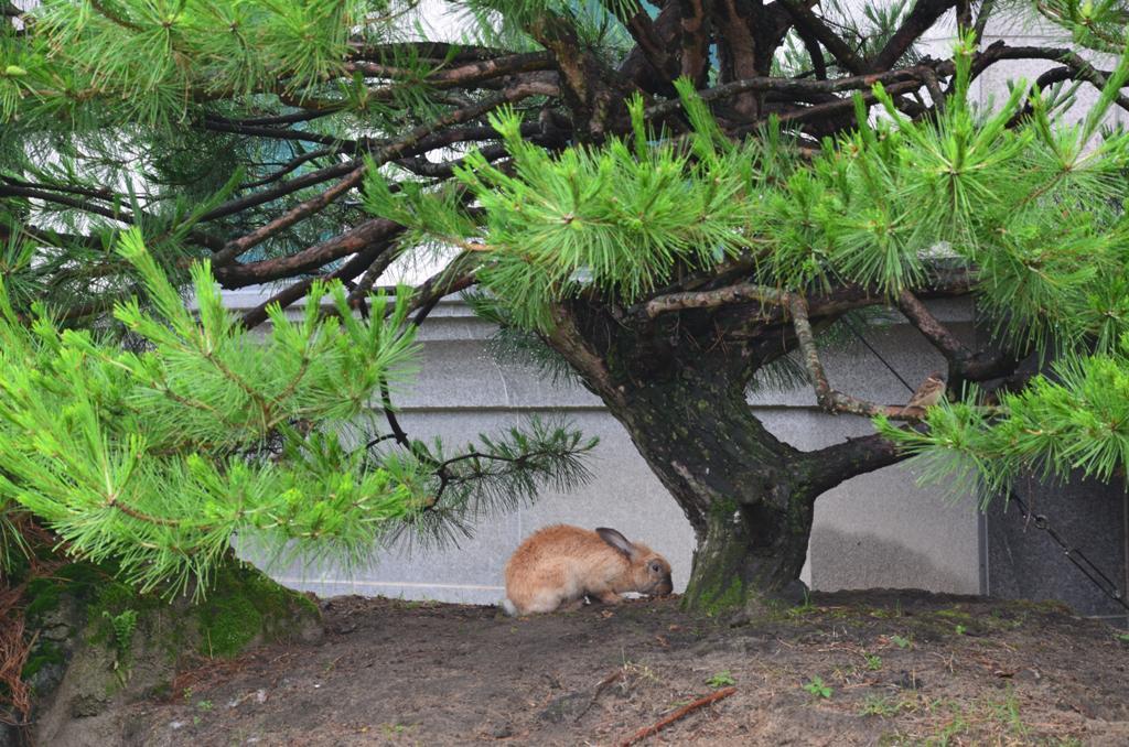 Nyuszi ul a fa alatt