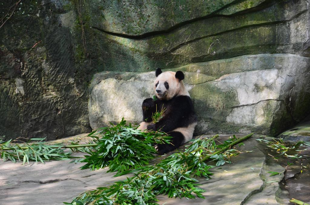 masik lusta panda