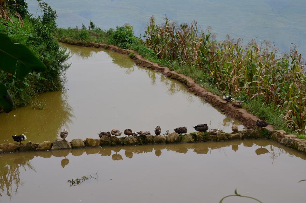 a falu aljaban a viz gyujto tavak, itt egylabu kacsakkal diszitve :)
