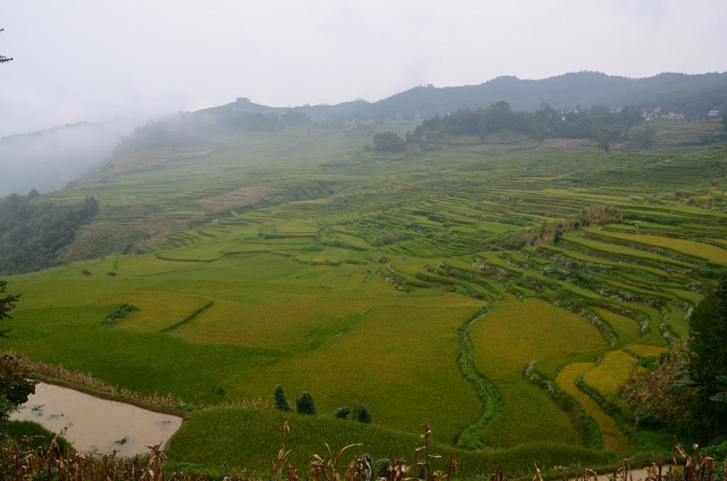 es az elmaradhatatlan rizsteraszok