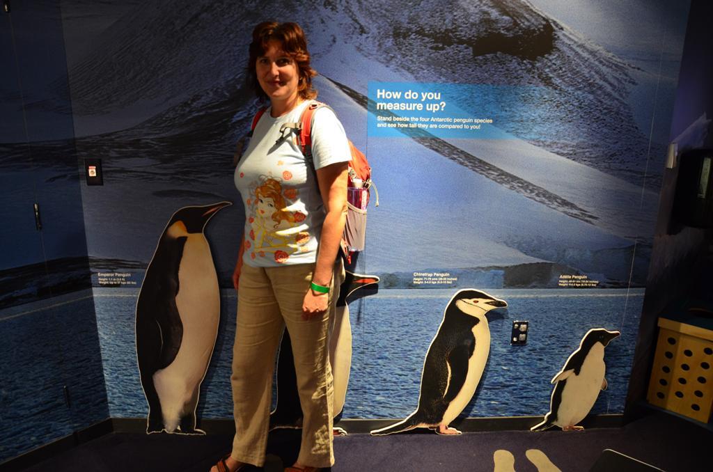 legnagyobb a csaszar pingvin