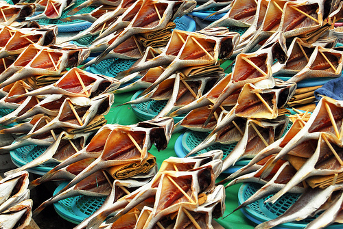 szarado halak.jpg