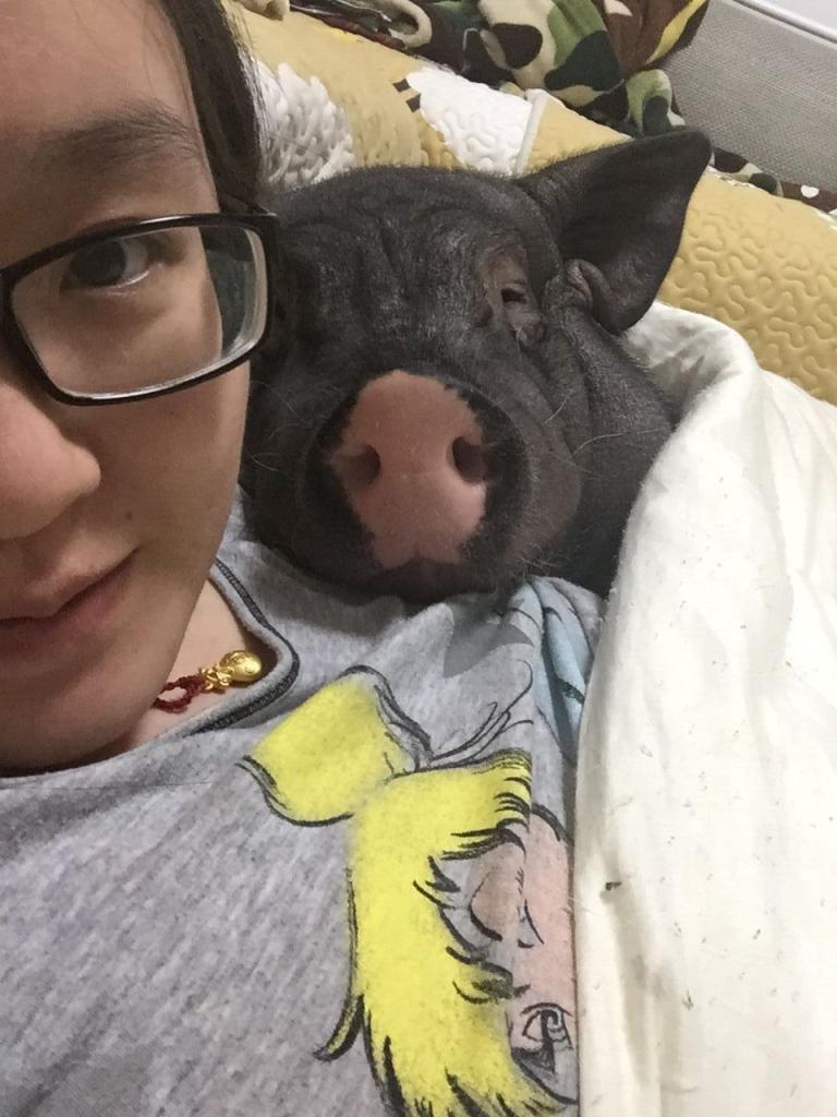 Ez a pekingi no, egy nepszeru blogon orokiti meg eletet szokatlan hazi kedvencevel, egy 85 kilos disznoval, akit suldo kora ota nevelget.