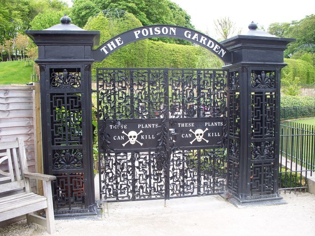 Mérgező növények a The Poison Gardenben - és otthon, a kiskertben