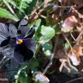 Jelentés a (majdnem) fekete kertből