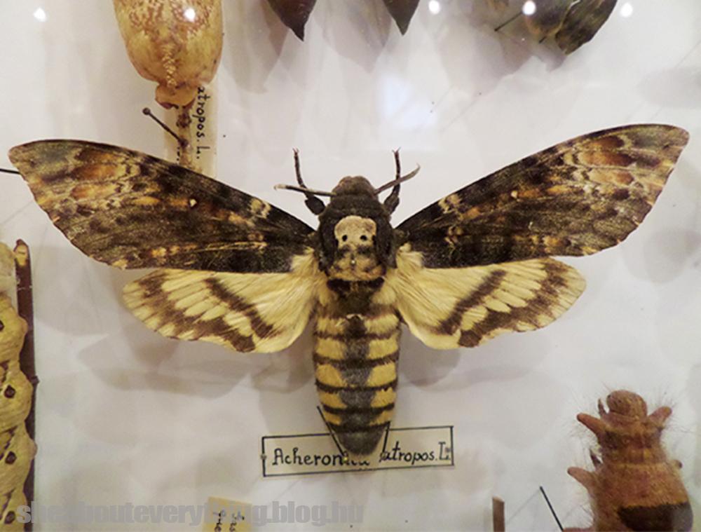5+2 dolog, amit nem tudtál a mézről
