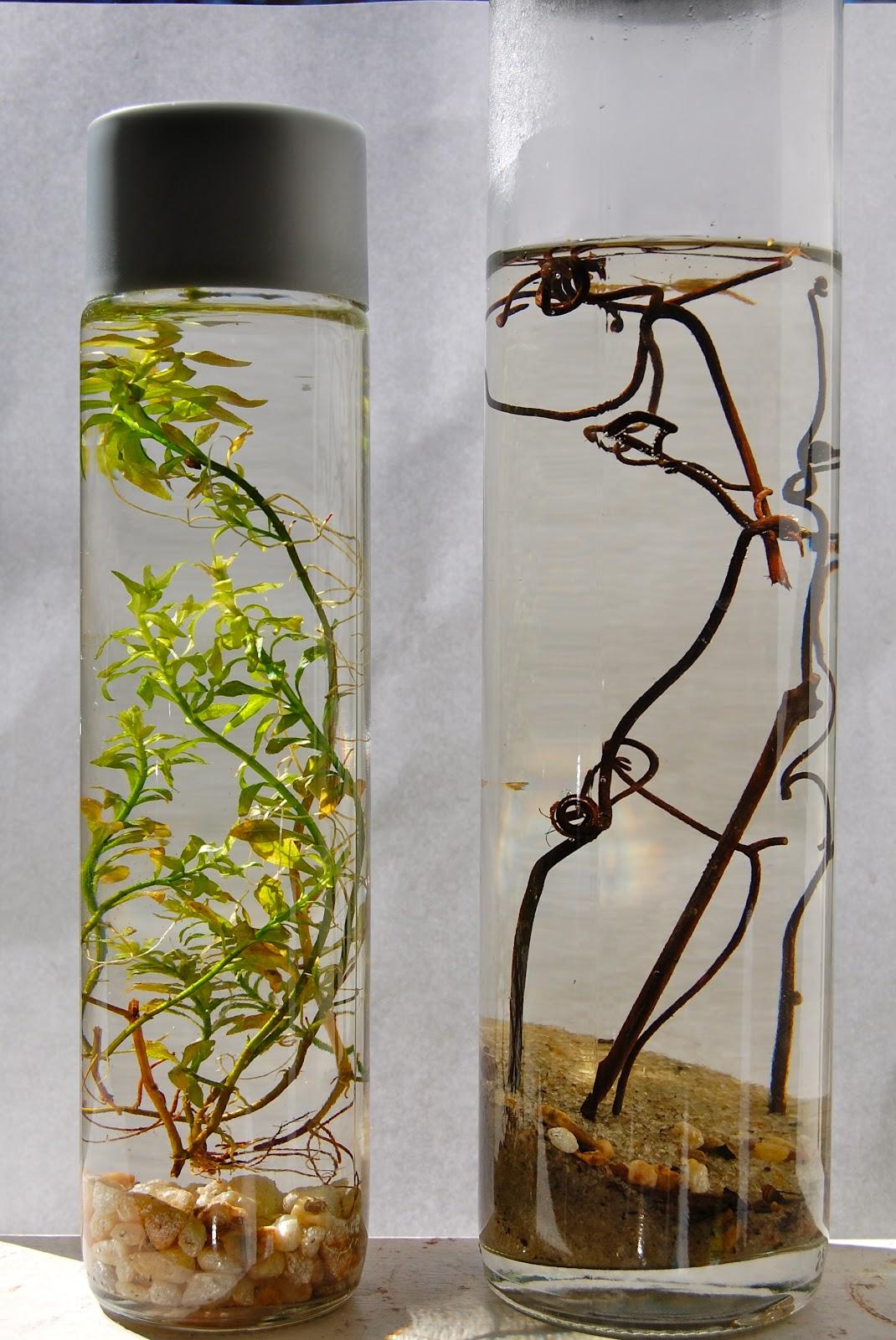 Van, aki komplett kis ökoszisztémáthozz benne létre (fotó: violetpapwerwings.blogspot.com)