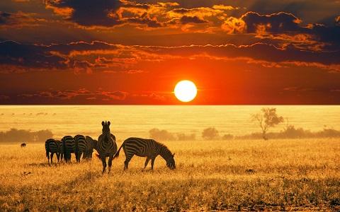 afrikai-szavanna-shae_vaj.jpg