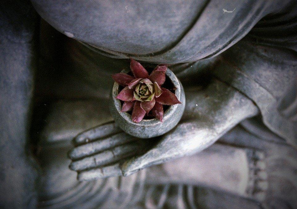 zen-lotusz.jpg