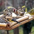 [#Dunaújváros] - Kezdődhet a madáretetés a Zöldkert Áruházzal!