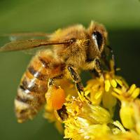 Egy csepp méz(nekvaló)