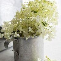 Skandináv virágos nőnapot kívánok!