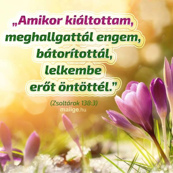 zsoltar_138_3.jpg