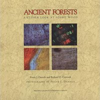 Ancient Forests: A Closer Look At Fossil Wood Download.zip