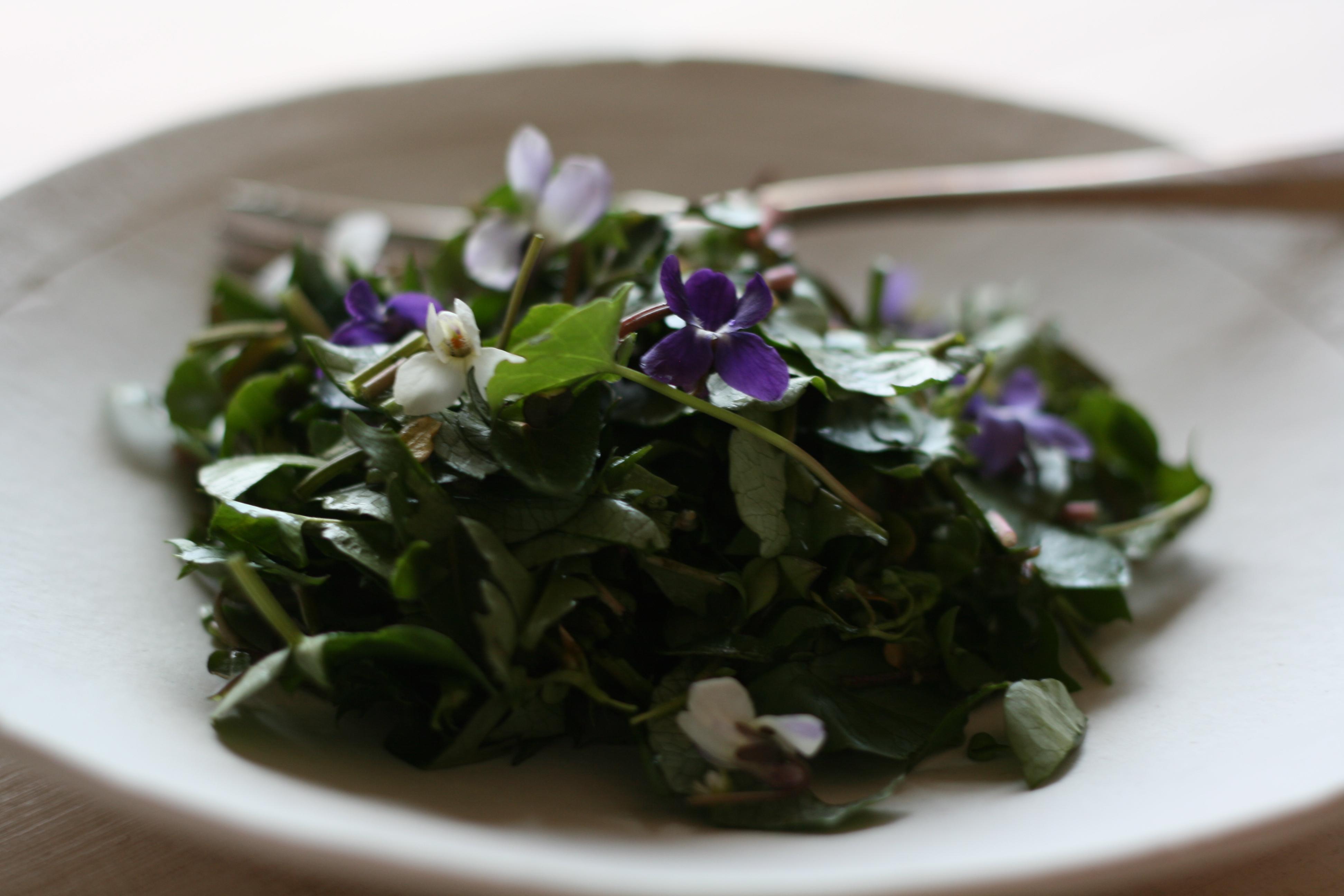 5ef-wildgreens_violet_salad3_jpg_masolata.jpg