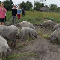Slow Food és slow kultúra a Rendek Ökotanyán