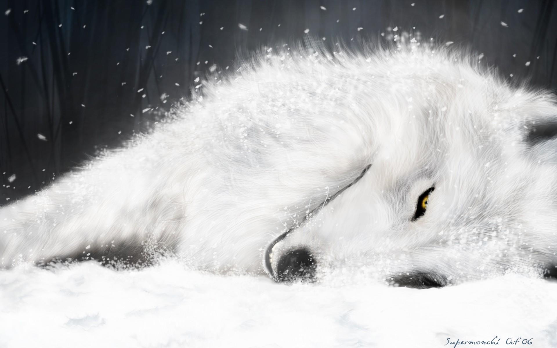 kiba_wolf_s_rain_full_51151.jpg