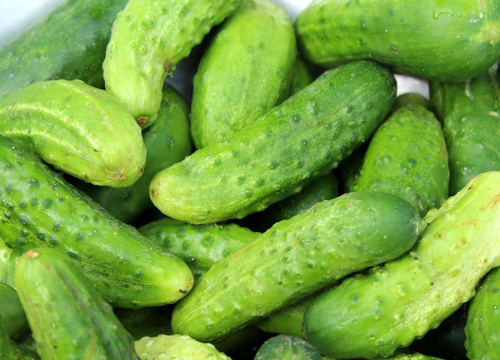 cucumbers-3534185_1920.jpg