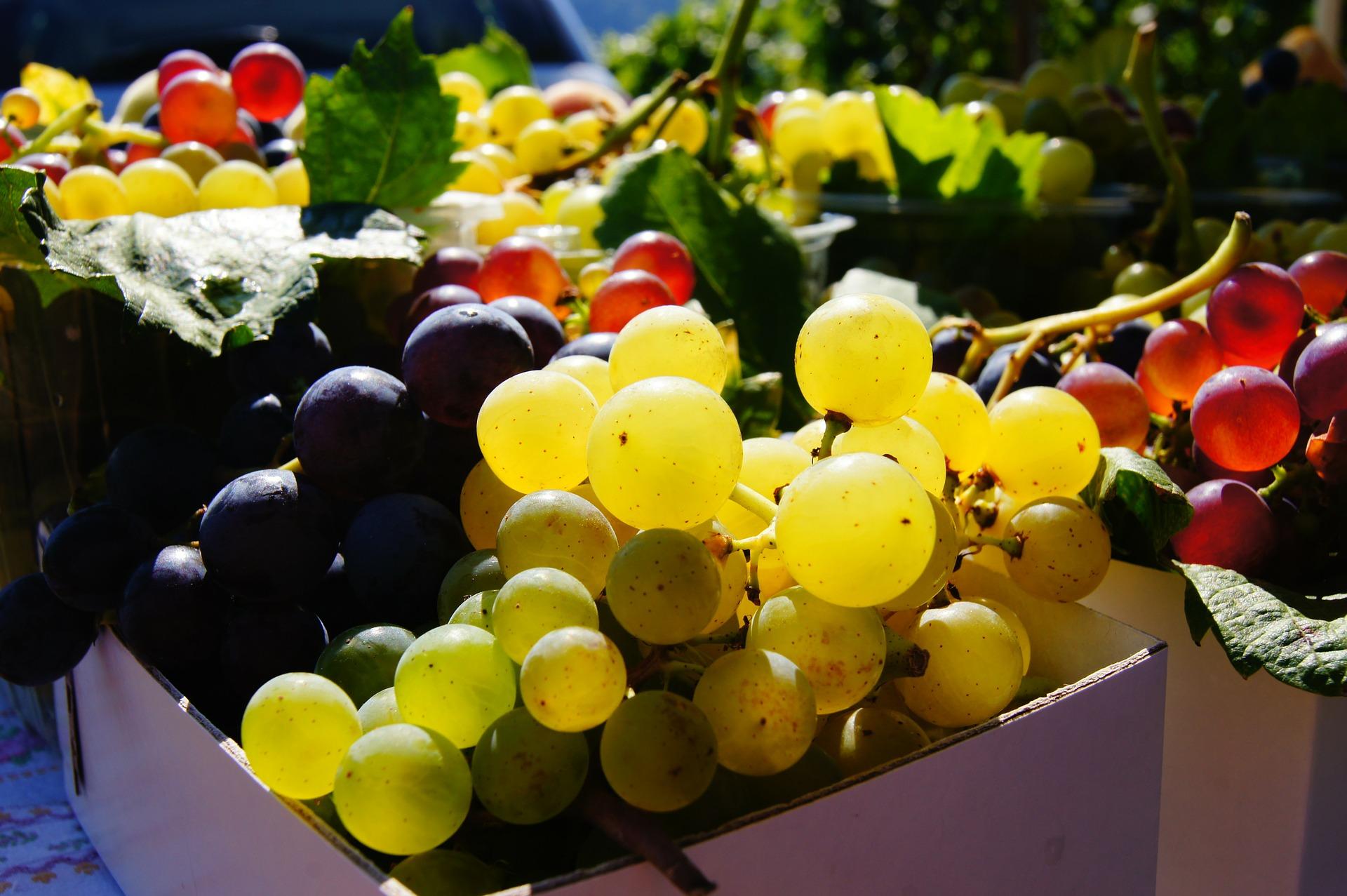 grapes-180118_1920.jpg