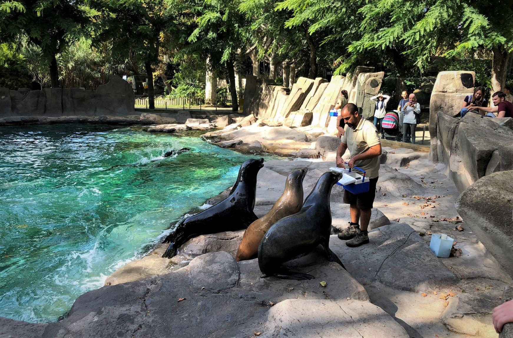 zoo_small.jpeg