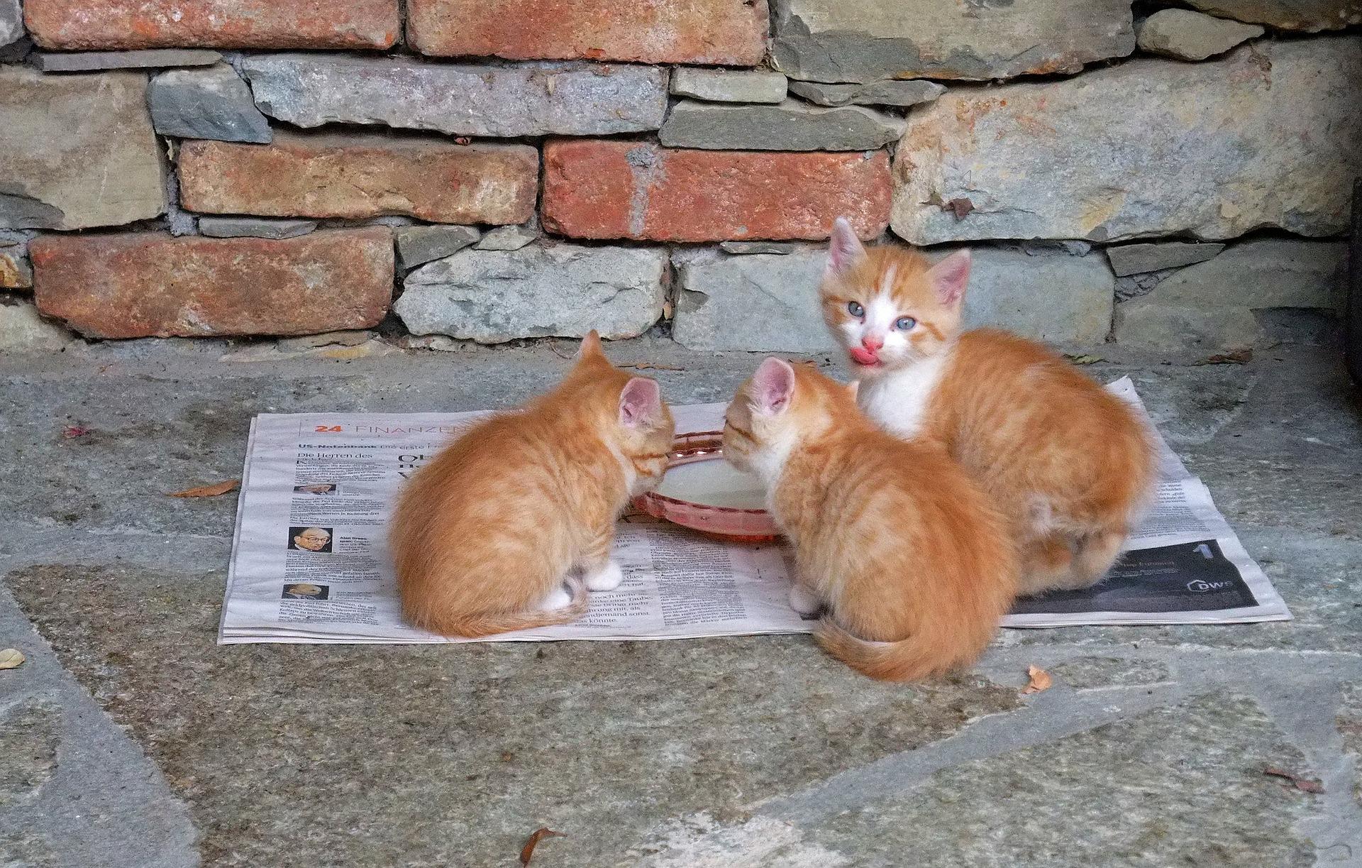 cat-214701_1920.jpg