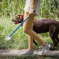 Okoseszköz segít ellenőrizni a kutyád egészségét