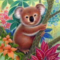 Izzik a hangulat Koalaországban