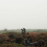Üvöltő szelek / Wuthering Heights (2011)
