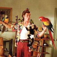 Ace Ventura: Állati nyomozoo / Ace Ventura: Pet Detective (1994)