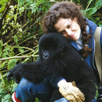 Gorillák a ködben / Gorillas in the Mist: The Story of Dian Fossey (1988)