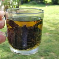 Így szárítsd a csalánt, hogy egész télre teád legyen belőle