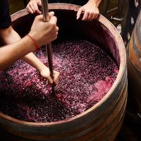 Így működik a többgenerációs borászat: ezek az előnyei