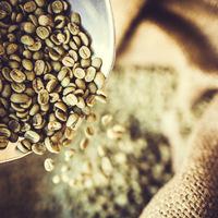 Hogyan lesz a kávé koffeinmentes? Ezeken az eljárásokon megy keresztül