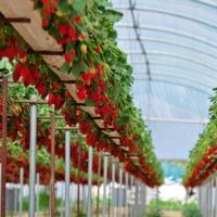 A tizenkét legszennyezettebb zöldség és gyümölcs - Legyünk körültekintőek a vásárlásnál