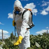 Így tisztítsd meg a zöldségeket és a gyümölcsöket a permetszerektől