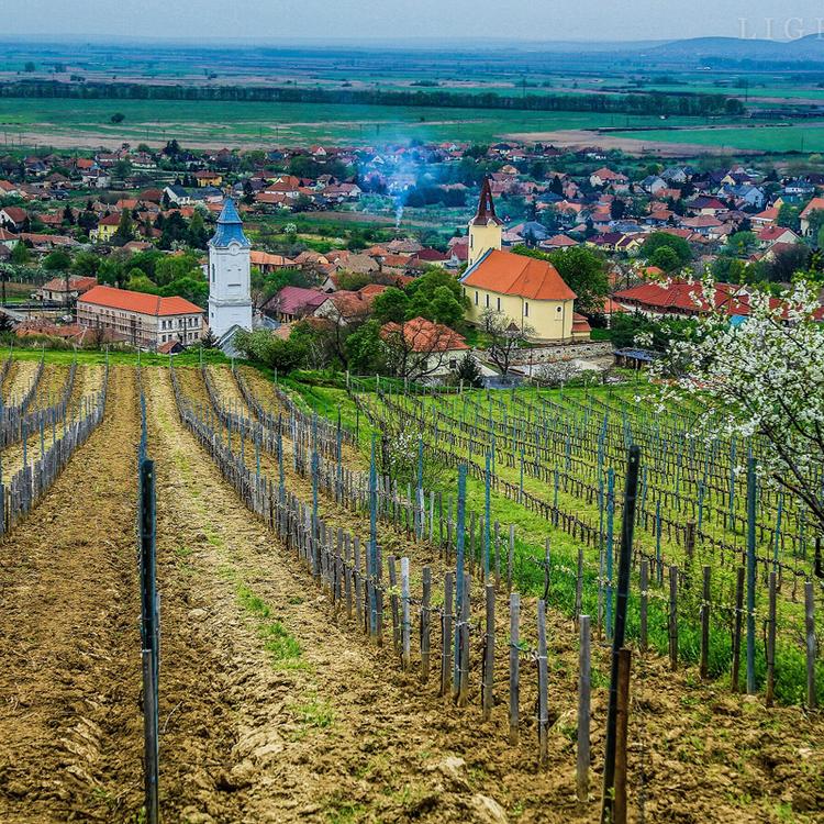 Bűbájos Hétvége, csodálatos borok - Tarcalon április végén a boroké a főszerep