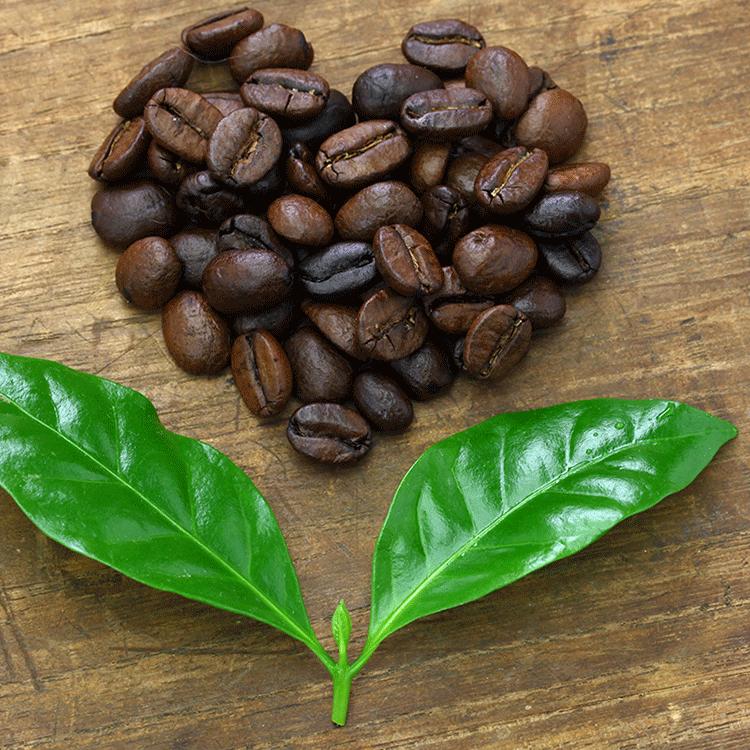 Itt a vég, veszélyben a kávé? Még meg lehet állítani a folyamatot