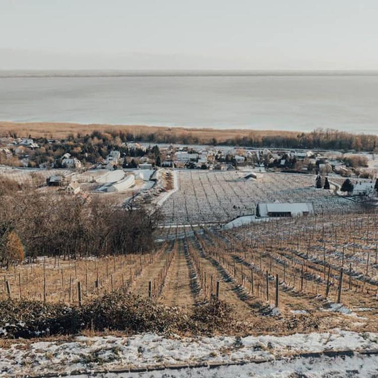 A legjobb magyar borok, ha másképp tartod a száraz januárt