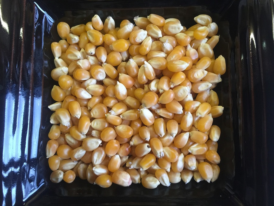 popcorn-877076_1280.jpg