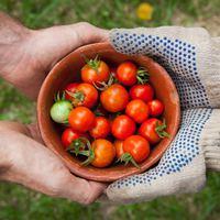 Ne hagyd magad befolyásolni: Így tudsz garantáltan pénzt keresni termelőként online